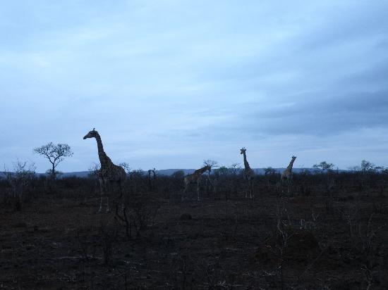 Bushwise Safaris: Night Safary
