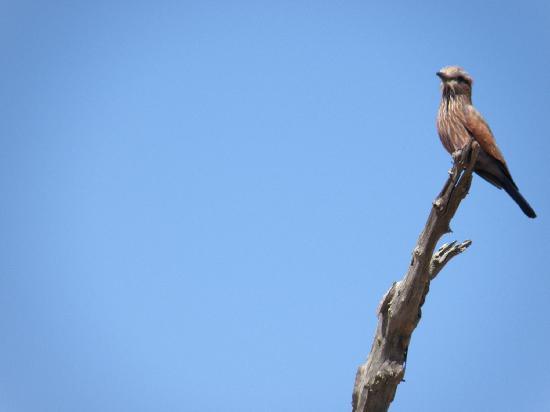 Bushwise Safaris: Bird