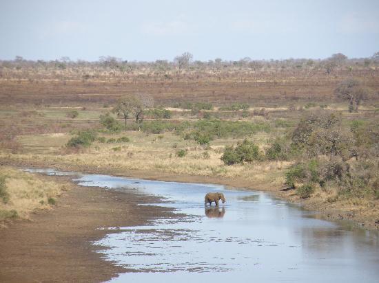 Bushwise Safaris: Great view