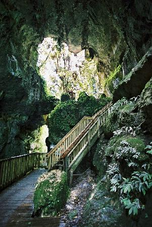Hamilton & Waikato Region, Neuseeland: Natural bride in Waitomo