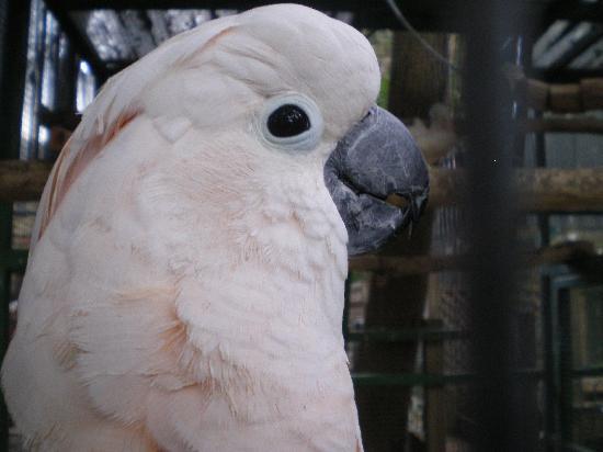 Ashmore Palms Holiday Village: so many gorgeous birds