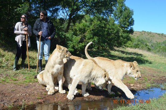 Great Brak River, South Africa: king of the jungle