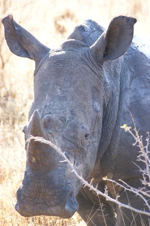 Garonga Safari Camp: Up close and personal with a female Rhino