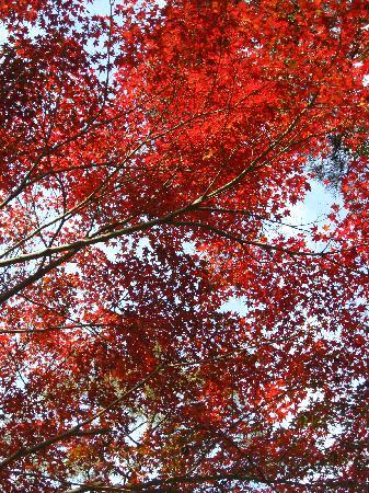 Shosen Valley: ふもと付近の見事な紅葉。