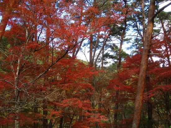 Kofu, Japan: 天鼓林。一面の赤。