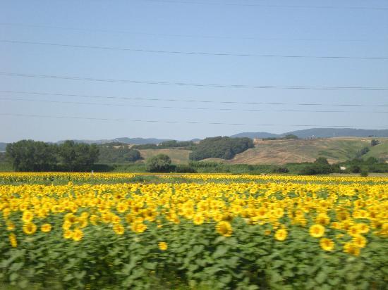 La Casella, Eco Resort: la campagna con i suoi ultimi colori estivi