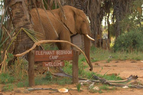 Elephant Bedroom Camp 2018 Prices Reviews Kenya Samburu National Reserve Photos Of