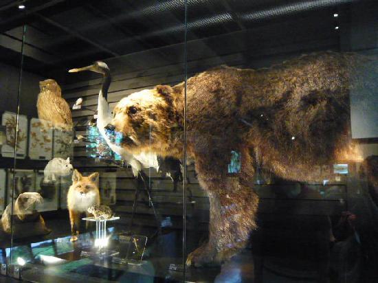 Taito, Japan: 動物の剥製