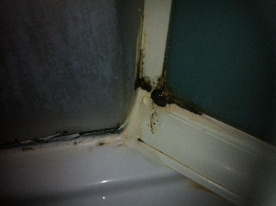 Beymarmara Suite Hotel : The dirty in the shower