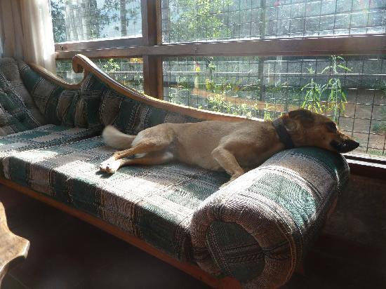 Kifaru Guest House: Most Friendly Dog in the World