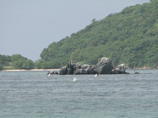 Tamarind Beach Hotel & Yacht Club: Pelican Island - great snorkelling!