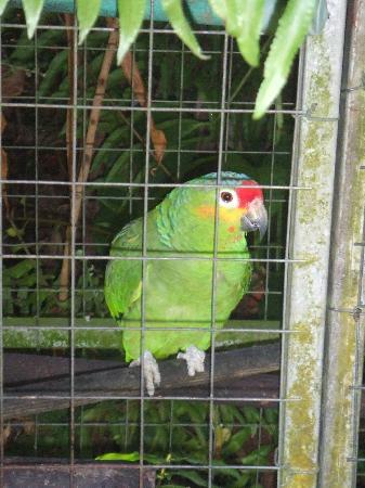 Posada Andrea Cristina: macaw