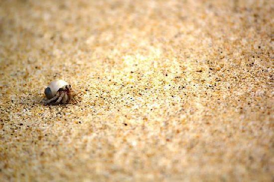 Janes Beach Fales: Hermit Crab