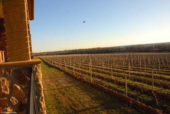 Seneca Lake Wine Trail: Sunset at Ventosa Vineyards