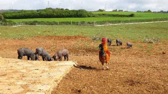 Cuesta de Patas: Nuestra granja