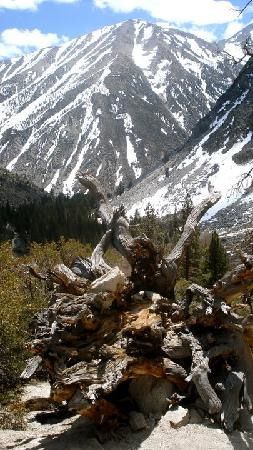 Inyo National Forest : big pine creek snow