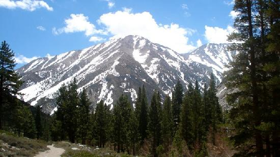 Inyo National Forest : mountains