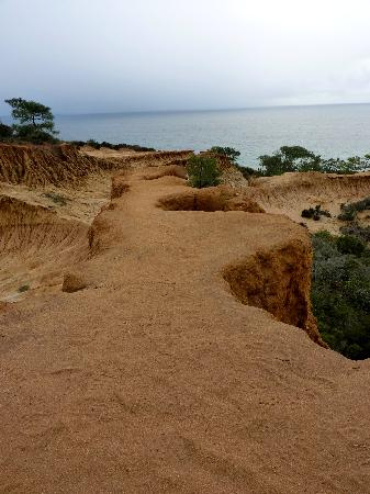 Torrey Pines State Natural Reserve: How one of the trails ends