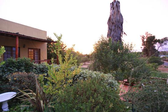 Gumtree Guest House: The Gumtree garden