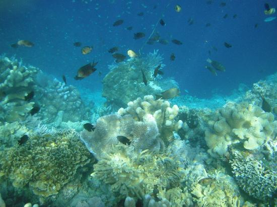 Bunaken Island, Indonesia: Another life under the sea. If we use professional underwater camera, I believe it'll turn out e