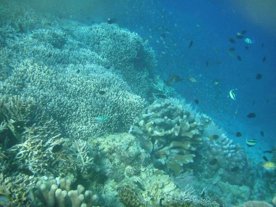Bunaken National Marine Park: School of Fish
