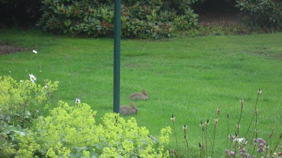 Silverhowe Bed & Breakfast: Resident wildlife enjoying breakfast