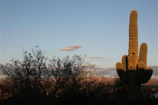Ana's Casa de Saguaro: View from the garden