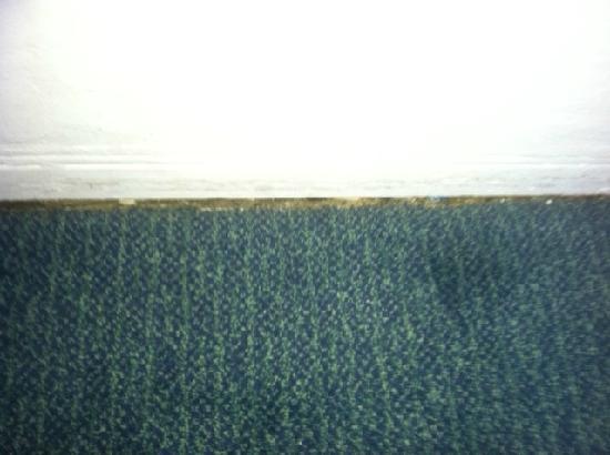 Avalon Hotel: carpet didn't meet the wall
