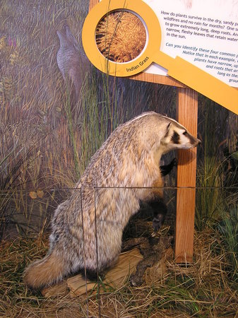 Necedah, WI: One of the many exhibits inside the visitor center