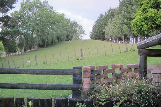 Thorold Country House: view of field behind the cottage