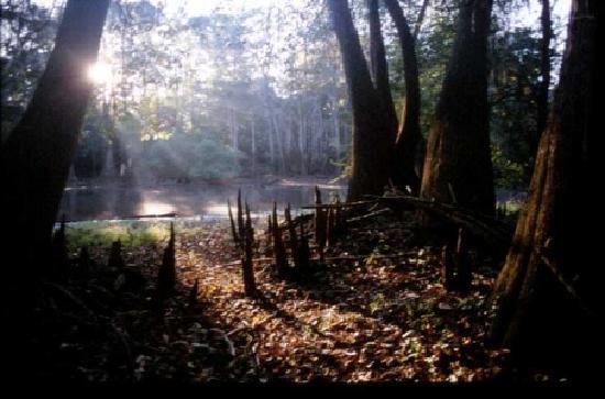 Budget Host Inn: Moody Forest - Baxley, GA