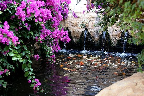 Sweimah, Ürdün: Водоем с рыбками на территории отеля.