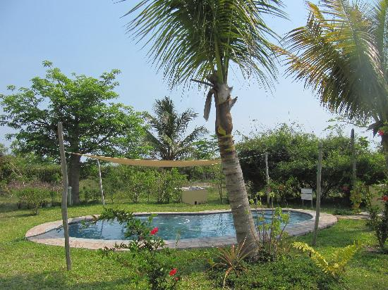 Casa Cabana Beach: The pool