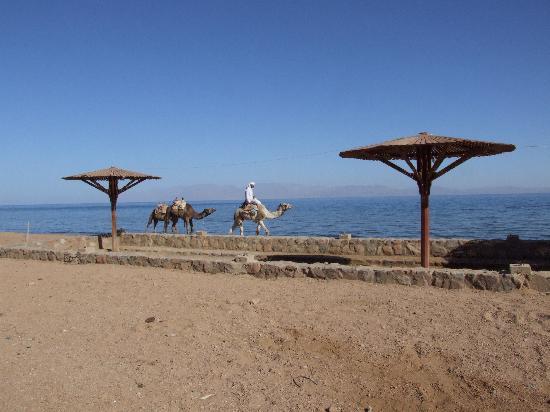 Amego Hotel Dahab: Beach