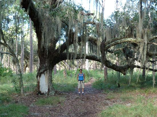 lots of spanish moss picture of lake kissimmee state park lake rh tripadvisor com lake kissimmee state park wedding lake kissimmee state park wedding