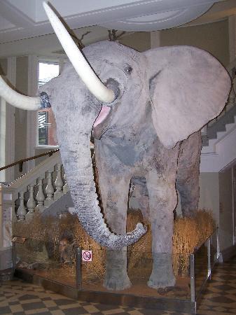 Luonnontieteellinen museo: At the entrance