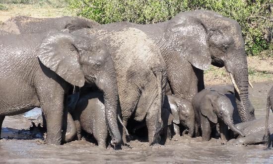 Kings Camp: Bathing Elephants