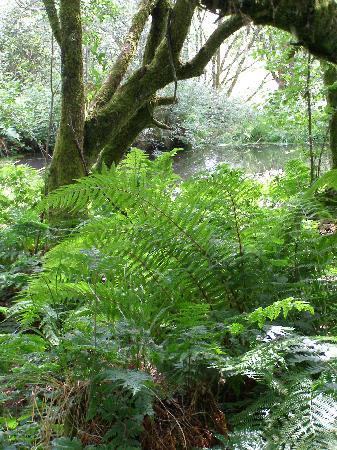 Wheatland Farm eco lodges: By the 'magic' woodland pond
