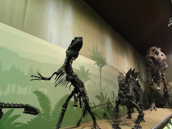 Milán, Italia: scheletri di dinosauri ricostruiti