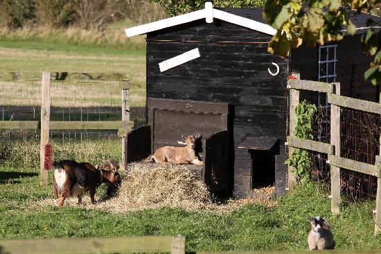 "Vejle Golf Bed & Breakfast : ""The Goat house"""