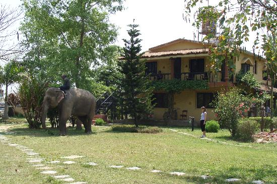 Sapana Village Lodge: Sapana Lodge - the elephants are coming back from safari