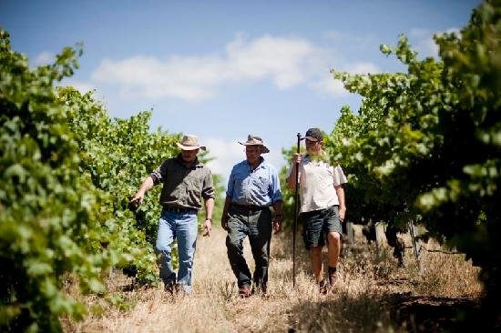 TeAro Estate: 3 generations of the Fromm family solving the problems of the world in the vineyard