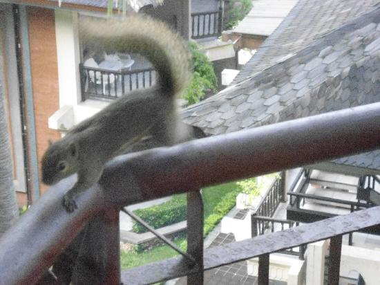 The Jayakarta Bali Beach Resort : Squirrels on our Balcony!