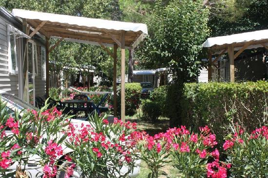 Camping Les Pins: Végétation luxuriante