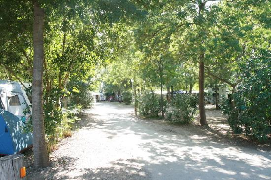Camping Les Pins: Nos emplacements