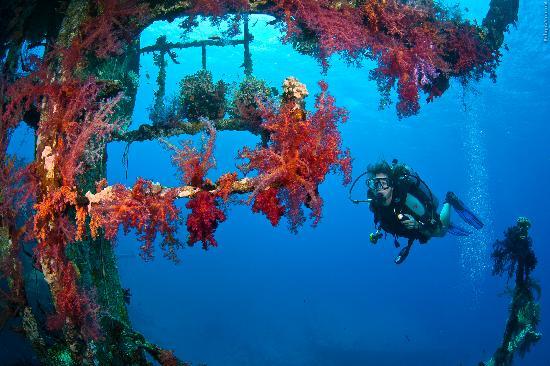 Sea Guard & Yasmena Boat: Cedar Pride wreck