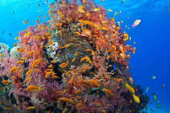 Sea Guard & Yasmena Boat: Corals!!!!