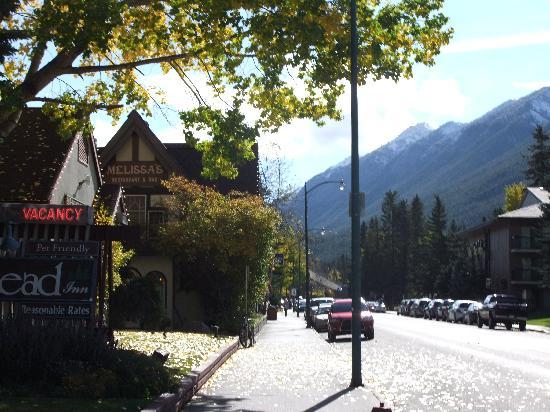 Homestead Inn照片