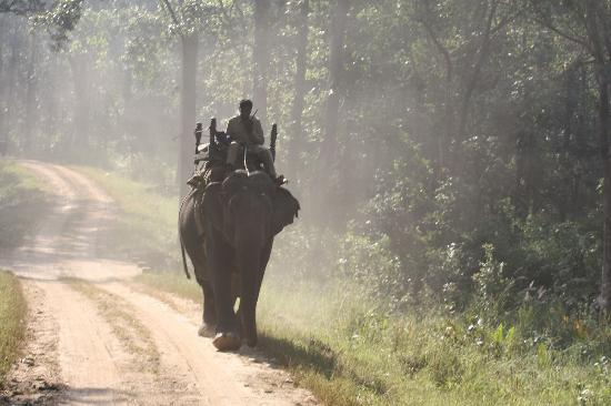 Chitvan Jungle Lodge: Elephants used for tracking tigers