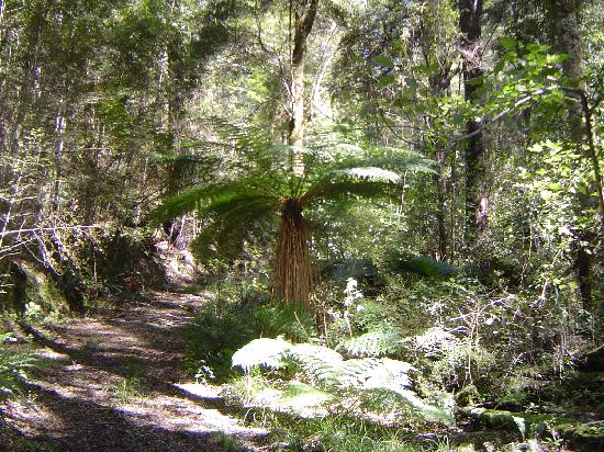 Awapiriti Lodge : Forest walk